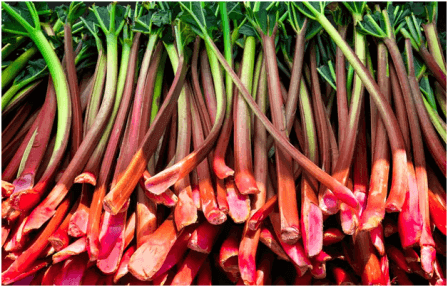 Rhubarb - 9 Deadly Foods You Have Been Hiding In Your Kitchen