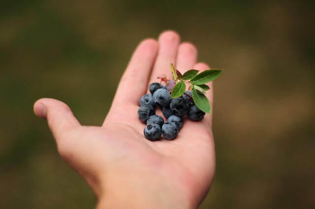 Handufll of Blueberries