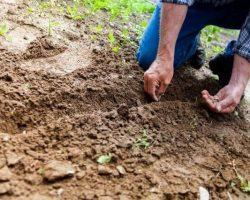 Men Seeding