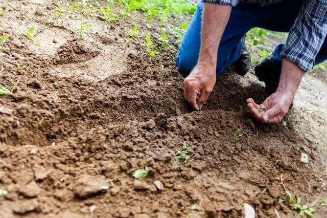 Men Seeding - The Amazing Health Benefits of Gardening