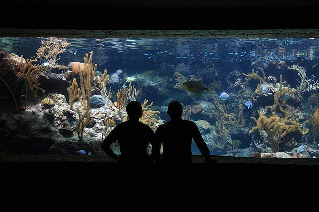 fish aqurium - Less Known And Cool Ways To De-stress From City Life