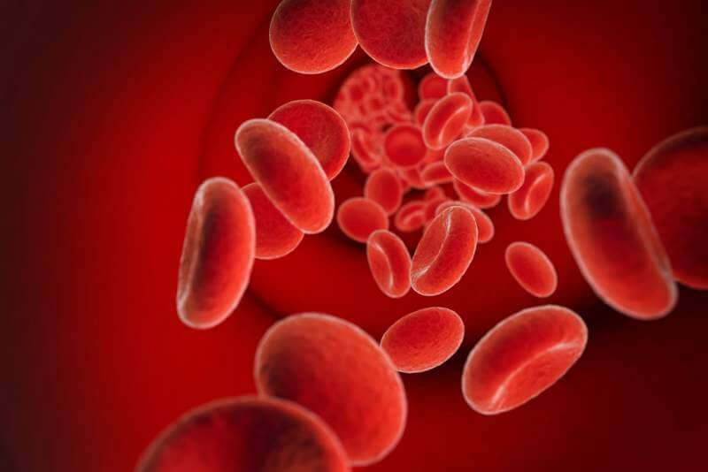 red cells in bloodstream