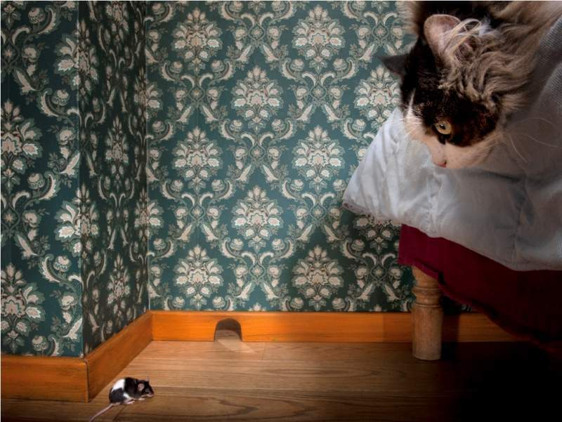 cat-and-mouse-in-a-luxury-old-fashioned-roon