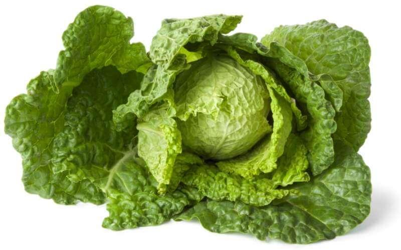savoy-cabbage