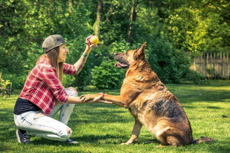 woman-and-dog-friendship-owner-and-pet