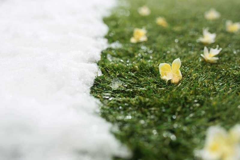 meeting-snow-on-green-grass-close-up-between