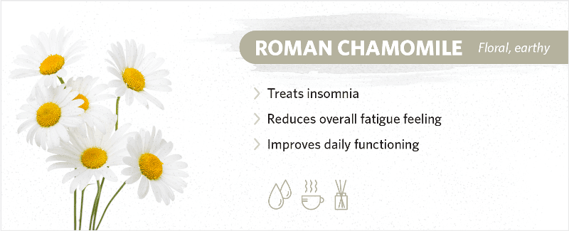 scents-to-help-you-sleep-roman-chamomile