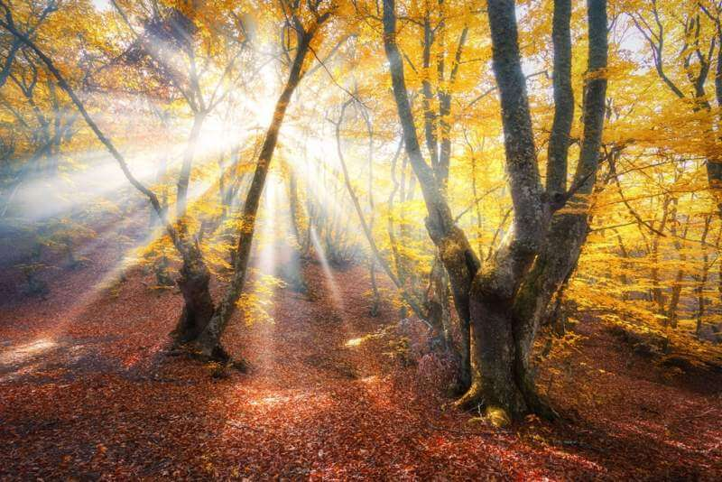 magical-autumn-forest-with-sun-rays