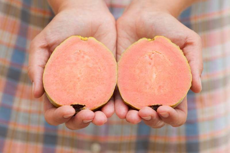 sliced-guava-fruit-in-womans-hands