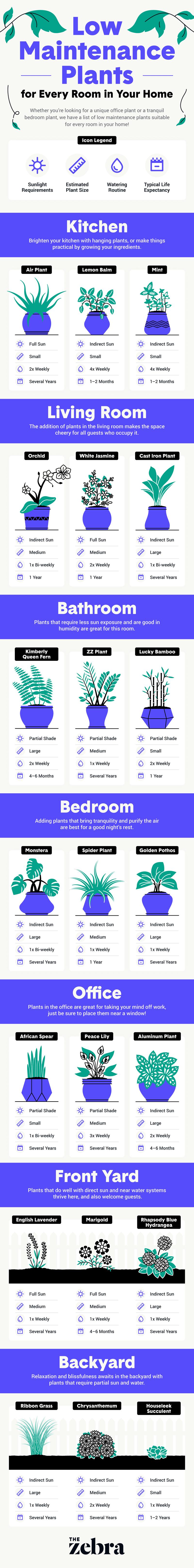 Low Maintenance Plants