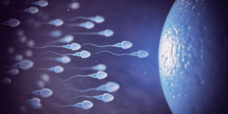 sperm-and-egg-cell-on-microscope-scientific