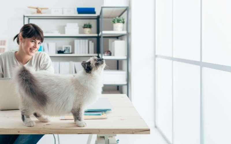 cat-on-a-desk