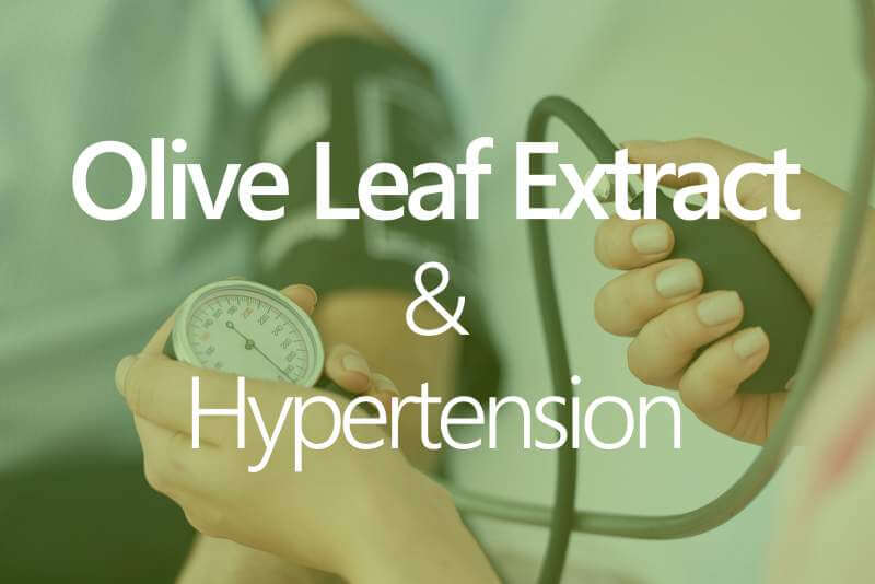 olive-leaf-extract-hypertension